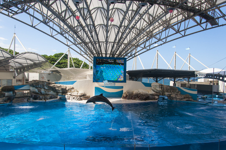 Dolphin performing in an amusement park