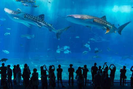 Okinawa Churaumi Aquarium,Okinawa, Japan -April 18 ,2018: Many tourists visit the Okinawa Churaumi Aquarium