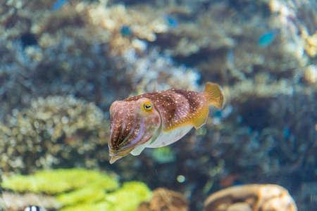 Beautiful cuttlefish in the aquarium