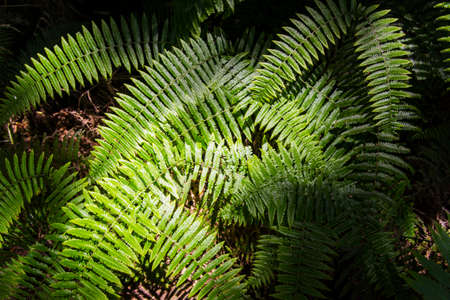 The sun shines on the fern