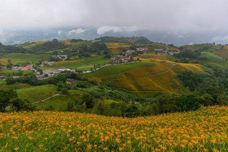 many daylilys in Sixty Stone Mountain