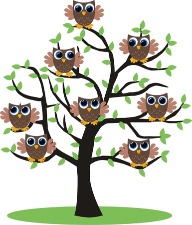 owl on branch: owls in a tree