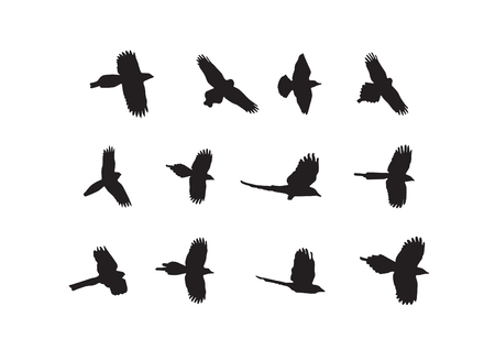 Bird flock silhouette on white background illustration.