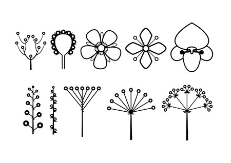 Flower type diagrams on white background illustration.