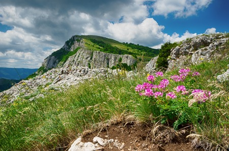 berm: landscape, beautiful view of the lush hills and mountains with flowers in the foreground