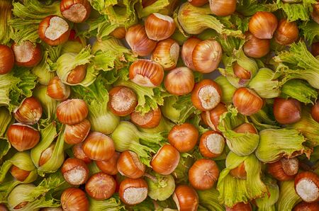 Background from nuts, hazelnuts in shell, autumn harvest Stok Fotoğraf