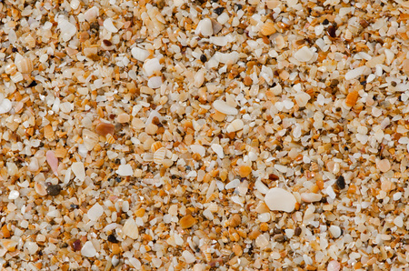 furlough: Natural background of small shells, crushed shells waves Stock Photo