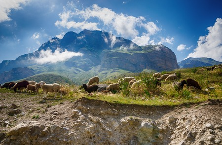 steep cliff: Sheep grazing on a steep cliff on the background of the Caucasus Mountains