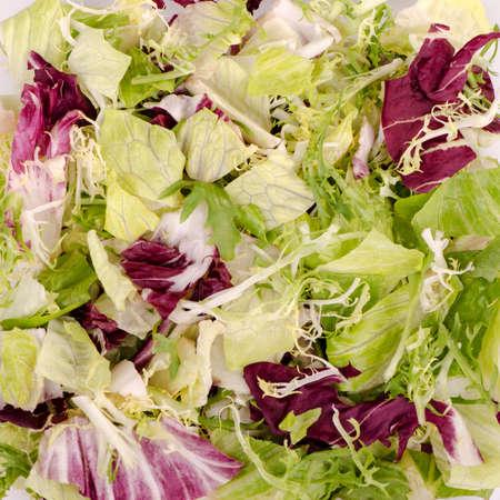 romaine: Natural background. Mixed salad frize, romaine, radicchio