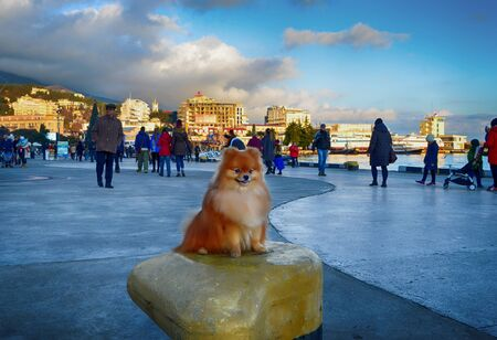 Yalta, Crimea, Russia : Beautiful red-haired dog sitting on the waterfront. Stok Fotoğraf