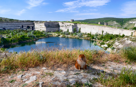 Pomeranian Spitz, a beautiful dog sits near an abandoned quarry Stok Fotoğraf
