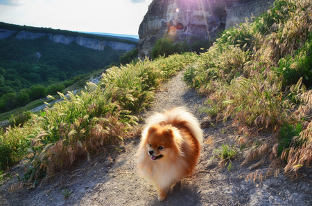 The dog walks along the path of the cave city at sunset, the Pomeranian