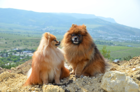 Two beautiful dogs sit on a hill, dating, funny Stok Fotoğraf