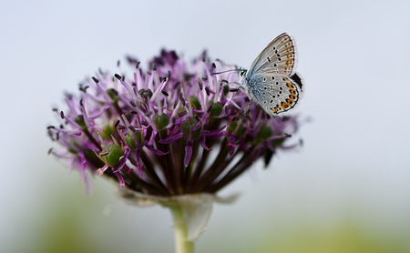 Blue butterfly sitting on a flower, close-up