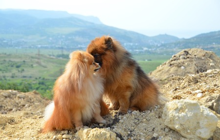 Two beautiful dogs sit on a hill, whispers in the ear
