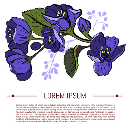 Viola odorata. Sweet violets on white background - hand drawn vector illustration in hand drawn style. With space for text.