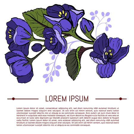 Viola odorata. Violettes douces sur fond blanc - illustration vectorielle dessinés à la main dans un style dessiné à la main. Avec un espace pour le texte.