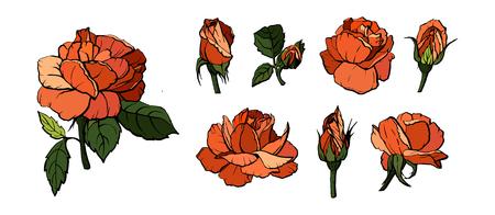 Ensemble d'éléments vectoriels de roses oranges (pétales, feuilles, bourgeon et fleur ouverte) avec la possibilité de changer l'apparence de la fleur. Concevoir la carte de voeux et l'invitation du mariage