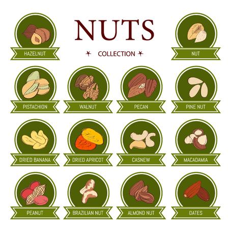 Ensemble de cartes AD (bannières, étiquettes, emballage) avec des noix DRAW à la main - noisette, amande, pistache, noix de pécan, noix de cajou, noix du Brésil, noix, arachide, pignons de pin. Art vectoriel.