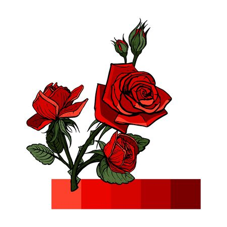 Flower composition. Flower garland of bright velvet red roses, buds, green leaves. A bud of a beautiful red rose and green leaves. Vector illustration.