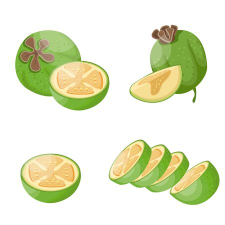Feijoa illustration set. Cartoon set of feijoa, vector illustration for web design.