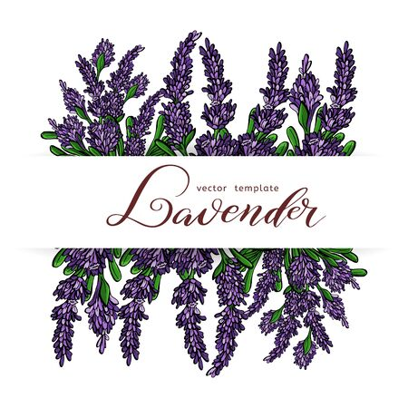 Lavender Card with flowers. Vintage Label with Provence violet lavender. Vector illustration. Standard-Bild - 129774457