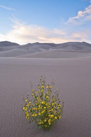 Great Sand Dunes National Park - Colorado, USA