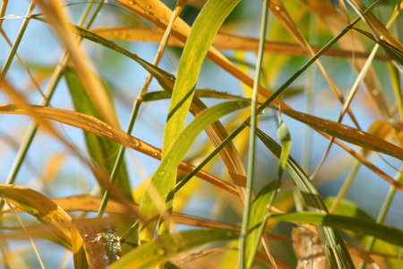 Autumn grass with dew drops Stock Photo - 5568599