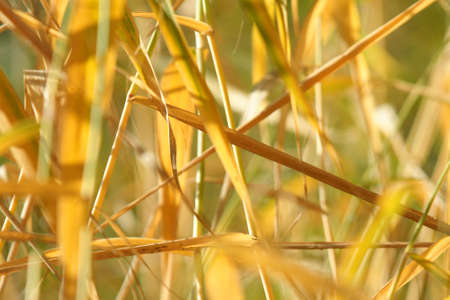 Autumn grass with dew drops Stock Photo - 5568593
