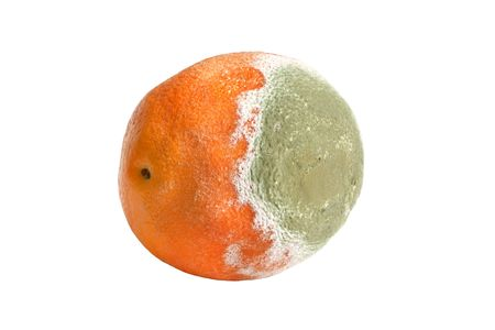 mustiness: Moldy rotten orange isolated on the white background