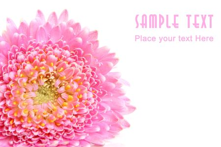 Closeup of pink flower isolated on the white background photo