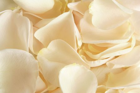 Closeup petals of rose, for backgrounds or textures Stock Photo - 6952821
