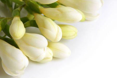 Closeup of white freesia on a white background Stock Photo - 7429508