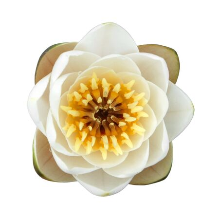 Water lily isolated on a white background Stock Photo - 7466898