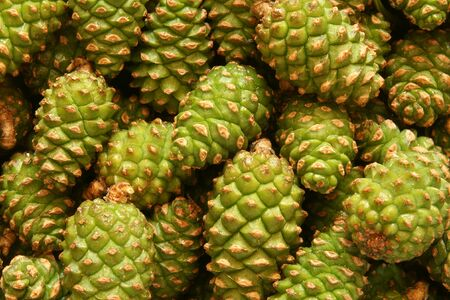 Green pine cones, for backgrounds or textures photo
