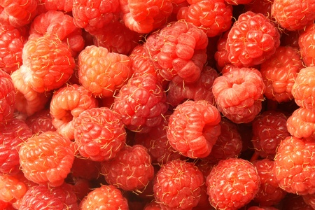 Berries of a raspberry, for backgrounds or textures