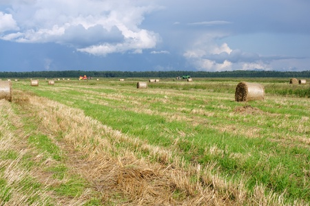 Round straw bales in the meadow photo