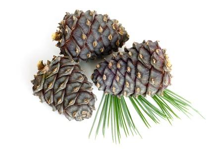 Branche de pin de Sibérie avec des cônes sur un fond blanc