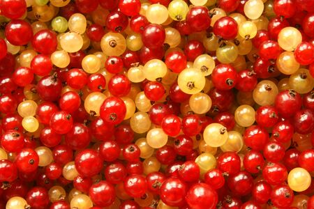 Berries of red and white currant, for backgrounds or texture photo
