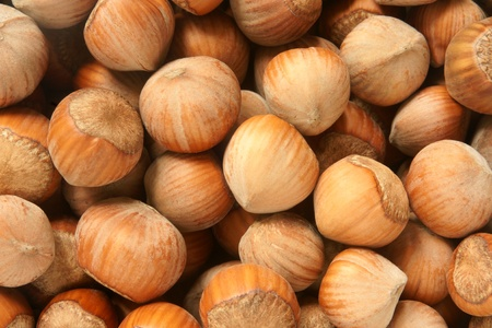 crust crusty: Hazelnuts, for backgrounds or textures
