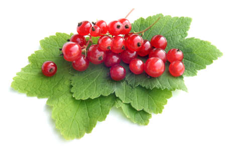 red currant: Berries of a red currant with leaves on a white background Stock Photo
