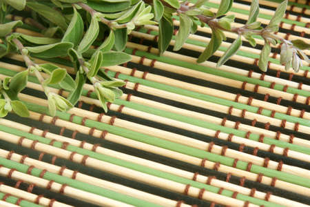 origanum: Fresh marjoram herb on a bamboo background, a horizontal picture Stock Photo