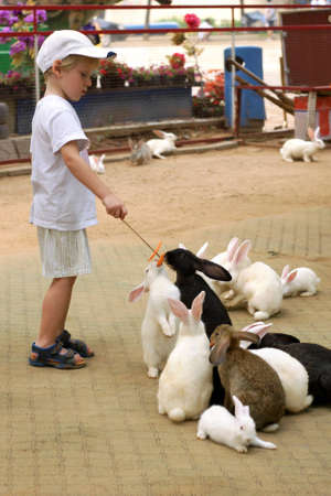 zoo youth: Little boy feed group rabbits with carrot