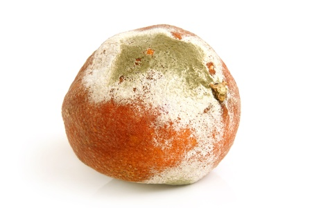 Moldy rotten orange on a white background photo
