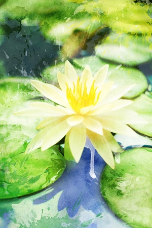 Watercolor white water lily on a pond, for backgrounds or textures photo