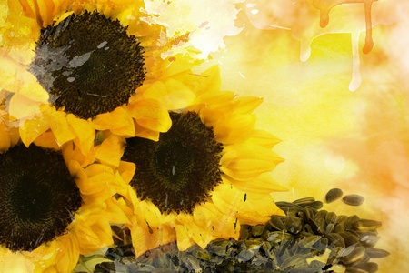 Watercolor yellow sunflowers and sunflower seeds, for backgrounds or textures photo