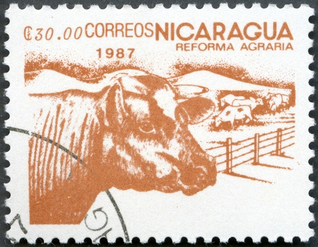 agrarian: NICARAGUA - CIRCA 1987  A stamp printed in Nicaragua shows image of agrarian reform, Cattle, circa 1987