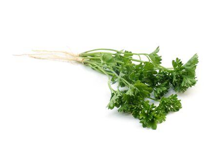Fresh parsley on a white background Stock Photo - 13624498