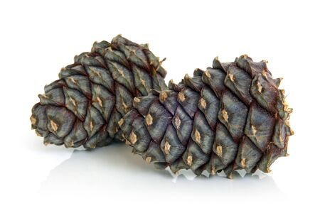 siberian pine: Siberian pine cones on a white background