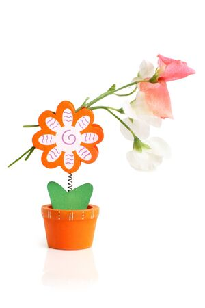 leguminosae: Wooden flower note holder with pea flowers on a white background Stock Photo